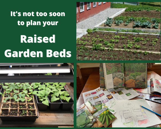 """Photo collage of hand drawn garden plan, plants under a growlight, and a raised garden bed with the words""""Hemlock, Douglas Fir, and Cedar in stock. It's not too soon to plan your Raised Garden Beds."""
